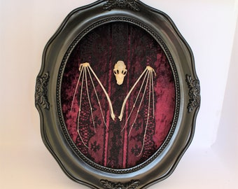 Taxidermy Bat Skull & Wings