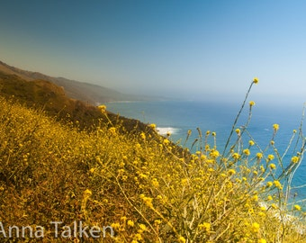 Big Sur Flowery Coastline