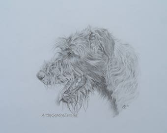 Pencildrawing Irish Wolfhound Original no Fine Art Print 11,6 x 15,3""