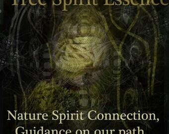 Hazel Tree Spirit Essence