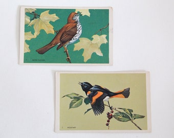 Vintage pair of bird postcards by National Wildlife Federation, Wood Thrush and Redstart, 1939