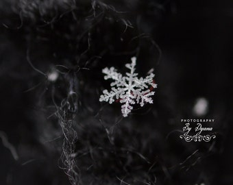 The Beauty of a Snowflake Photo or Notecard