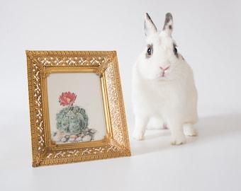 Framed Cactus Bookplate