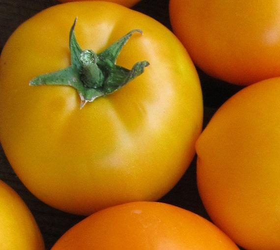 Tomato: Mountain Gold