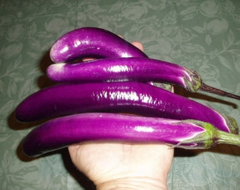 Eggplant Plant, Ping Tung Long Organic