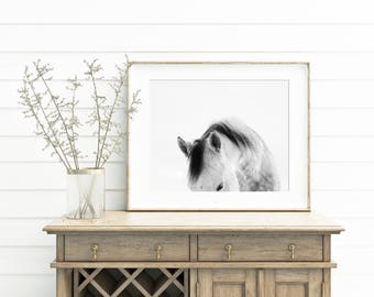 Modern White Horse Photograph | White on White Horse Art Print | PHYSICAL PRINT