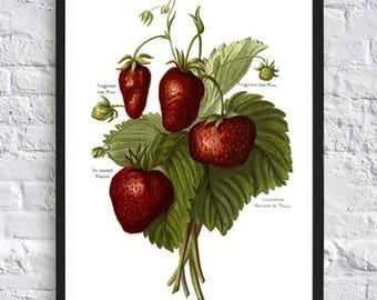Strawberry print berries print kitchen print poster kitchen wall art print botanical illustrations vintage painting print garden red green