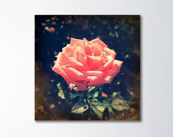 Shabby Chic Decor, Bedroom Art, Boho Decor, Large Art, Romantic Art, Rose Canvas Art, Vintage Floral Art, Flower Photography, Boho Chic Art