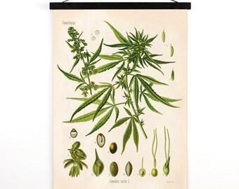 Marijuana Pull Down Chart - Vintage Botanical Cannabis Sativa Diagram Reproduction Print - Kohler's Botanical Medicinal Plant Guide -CP247cv