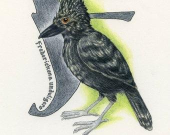 Avian Alphabet F