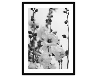 The pink Hollyhock • Art • Island photography