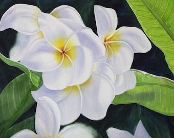 White Plumeria Painting Kauai Hawaii