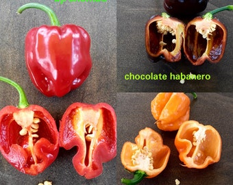 FRESH/EDIBLE Habanero  pepper mix: 10  Freeport Orange/ 10 Jamaican chocolate/ 10 Aji chombo - 10 fresh peppers of each variety!!
