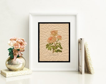Floral Art Print, Grace Darling Rose Flower Wall Art, French Country Cottage Chic Room Decor, Artwork for Home, Botanical Art Modern Vintage