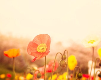 Poppy Photograph, Nature Photography, Red Poppies Wall Art Print   , field of poppies, yellow orange flowers, nursery decor, girls room