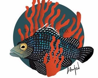 Black Sea Bass Print