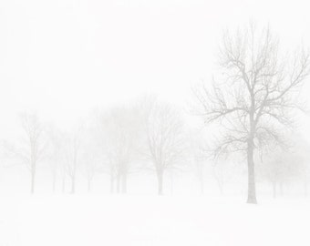Winter photography, snow, storm, neutral, black and white, trees, wind, winter white, modern decor, simple