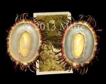 """12"""" X 18"""" Electrophotographic Print of 'Nöel - le Jardin Secret'"""