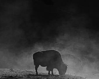 LG. Foggy buffalo print 8x10/11x14