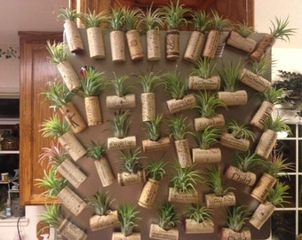 airplant wine cork magnet