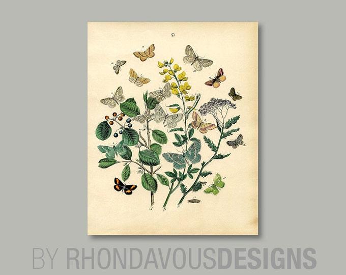Butterfly Art. Butterfly Print. Butterfly Wall Art. Dining Room Art. Dining  Room