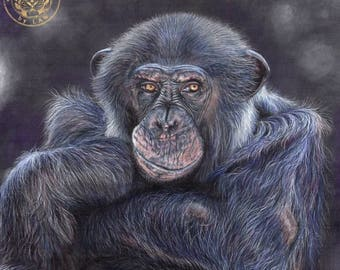 Chimp Wildlife Art - Hand signed small fine art print - Chimpanzee