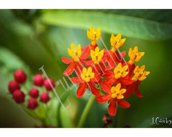 Yellow and Orange Flower Photograph