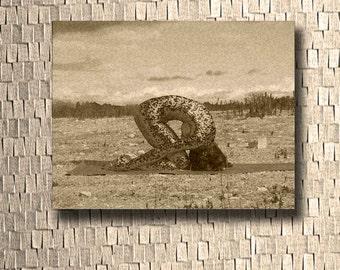 Yoga Art Print ~ Golden Bronze Snake Skin Rabbit Pose Yogi Art Print Signed on Reverse by Deprise Brescia