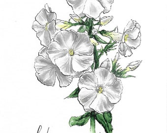 "Original Phlox Flower Watercolor ""Mantra Flora"" Print"