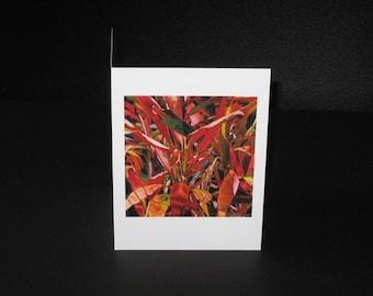 Lengua de Dragon Greeting Card