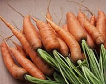 Danvers Half Long Carrots 100+ seeds, OP/Heirloom red carrot seeds