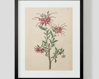 Botanical Print Plate 1319