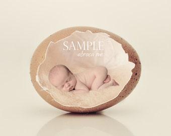 newborn EGG digital background/newborn digital backdrop/instant download