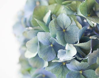 Photography Print - Blue hydrangea flower -  shabby chic - floral art for your home