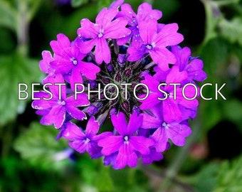Purple Flower Cluster Background Photo Stock | Digital Image | Business Promotion