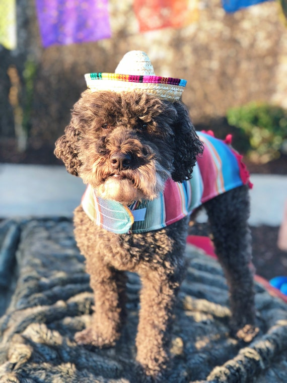 Sombrero || Mini Sombrero || Dog Hat || Straw Hat || Mini Sombrero ||  Fiesta Party || Fiesta Hat