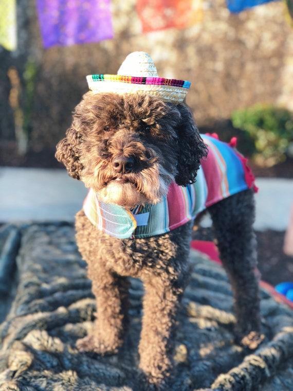 Sombrero || Mini Sombrero || Dog Hat || Straw Hat || Mini Sombrero ||  Fiesta Party || Fiesta Hat
