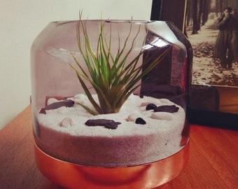 Classic-look air plant terrarium