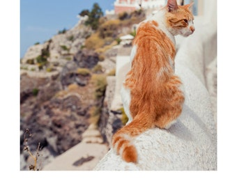 Santorini Kitty: A3 Giclee Art Print of original photograph