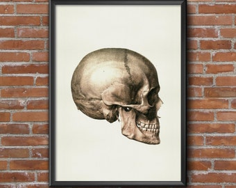 Old vintage Illustrations of Anatomy-Anatomy-medical Skull Prints