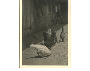 Hens and chicks - bucolic farm yard - photography lover instant old black and white - France-fine silver - 1930-50