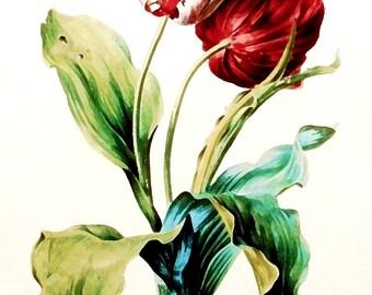 Temporary tattoo - Tulip