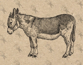 Donkey Antique Retro Drawing image Instant Download printable Vintage picture clipart digital graphic for  transfer, iron on  etc HQ 300dpi