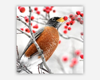 ROBIN - Archival Print Face-mounted to Plexiglass - Ready To Hang- Winter Scene Photograph, Contemporary / Stylish Finish