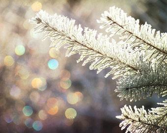 Winter Photography, Christmas Prints, Christmas Tree, Christmas Art, Pine Tree, Winter Wonderland, Christmas Lights, Christmas Wall Art