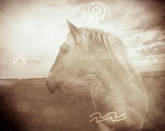 Earth Age Horse