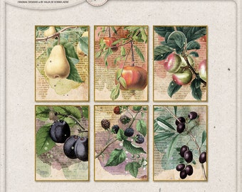 Home Decor, Wall Art, Fall Decorations, Autumn Themed Printable ATC, Vintage, Harvest Fruits, Instant Download, Botanical Fruit Prints,