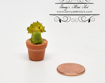 1:12 Dollhouse Miniature Planted Cactus/Miniature Garden BD A1609