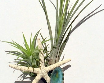 Air Plant Boutonniere made just for him Beach Wedding