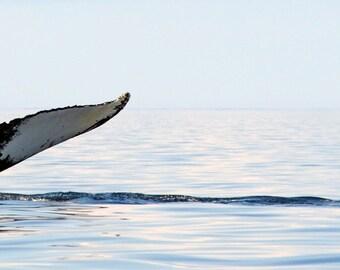 A soft Humpback Whale Tail DSC3206